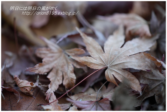 f0361079_16165298.jpg