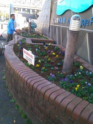 ガーデンふ頭総合案内所前花壇の植替えH29.12.18_d0338682_08413777.jpg