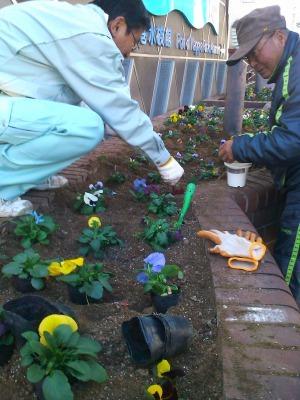 ガーデンふ頭総合案内所前花壇の植替えH29.12.18_d0338682_08420819.jpg