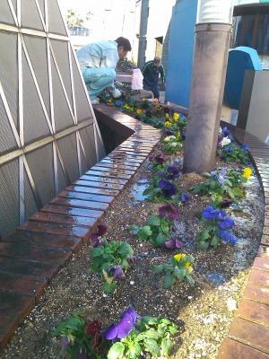 ガーデンふ頭総合案内所前花壇の植替えH29.12.18_d0338682_08425256.jpg