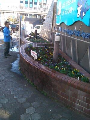 ガーデンふ頭総合案内所前花壇の植替えH29.12.18_d0338682_08432871.jpg