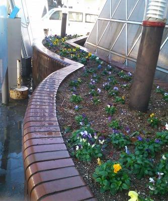 ガーデンふ頭総合案内所前花壇の植替えH29.12.18_d0338682_08441156.jpg