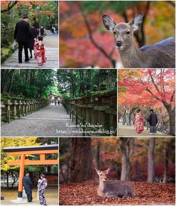 奈良旅行最終編_d0148187_20292036.jpg