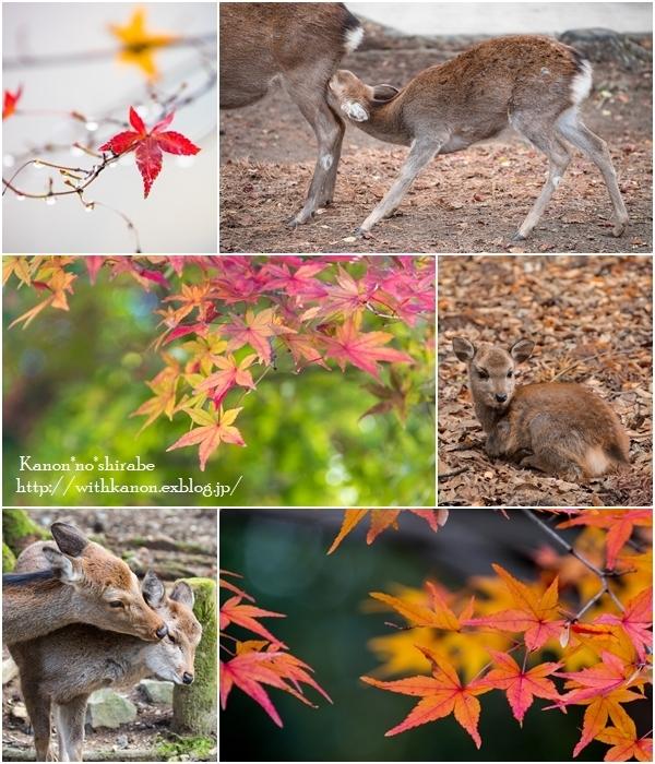 奈良旅行最終編_d0148187_20292442.jpg
