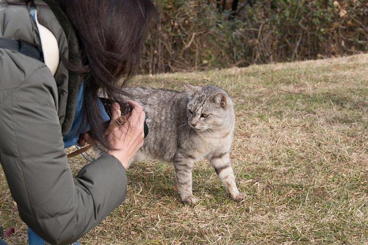 師走の桜猫たち_d0353489_6595773.jpg