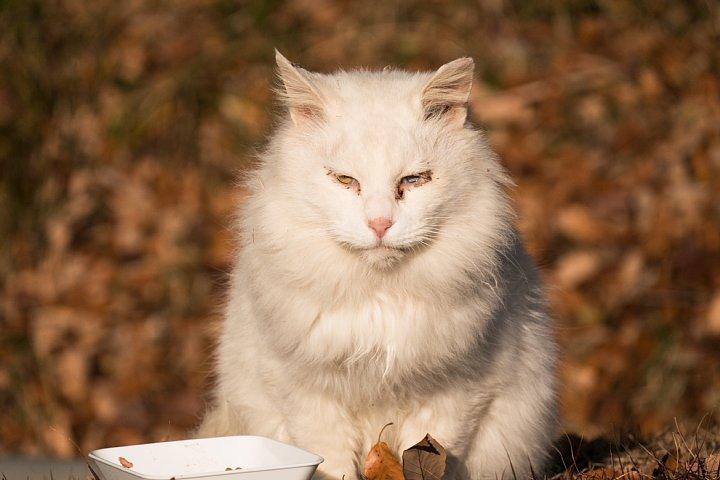 師走の桜猫たち_d0353489_7228.jpg
