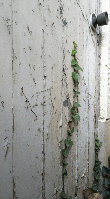 冬の庭 _c0203401_12073582.jpg