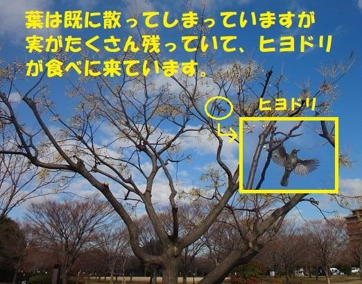 f0121712_22465507.jpg