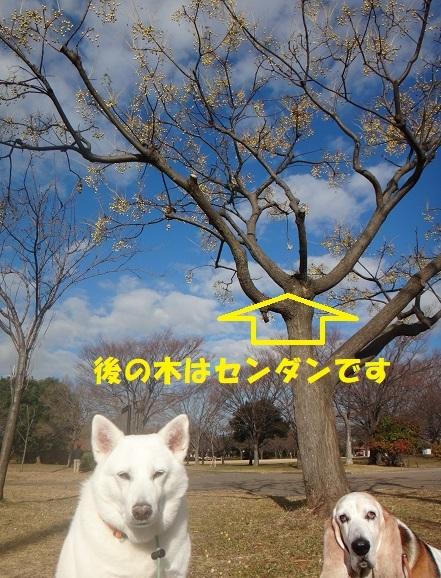 f0121712_22480308.jpg