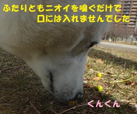 f0121712_22595292.jpg