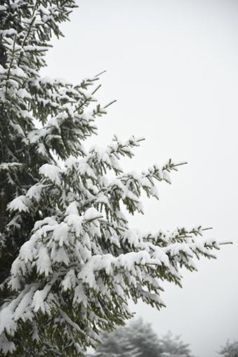 雪の日の小さなお出かけ_b0259218_02405722.jpg