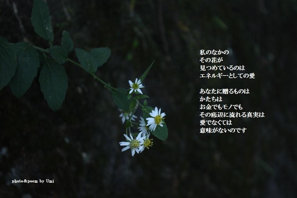 f0351844_22033700.jpg