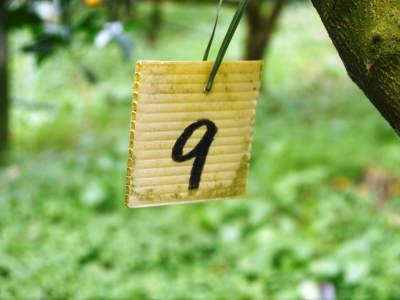デコポン予約受付開始します!熊本限定樹上完熟デコポン「ひのゆたか」を満を持して1月7日からの出荷です!!_a0254656_18120408.jpg