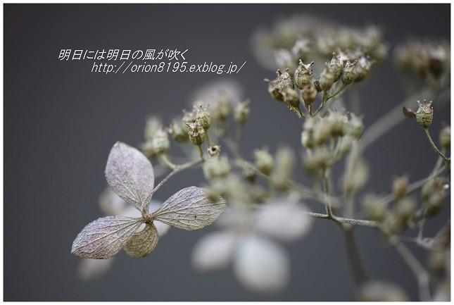 f0361079_15235550.jpg