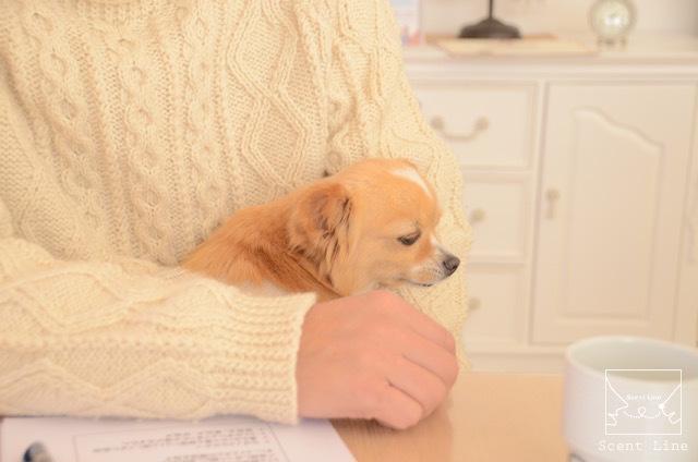 ペットと暮らすヒトのための心理学セミナーレポート_c0099133_23331986.jpg