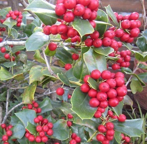 もうすぐクリスマス♪_b0177436_20052163.jpg