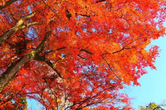 京都パンパン赤線時代 五十四_f0347663_16051988.jpg