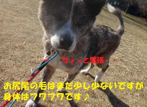 f0121712_05461040.jpg