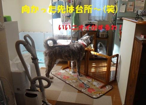 f0121712_06094411.jpg