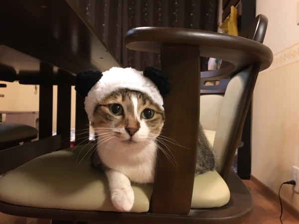 パンダ de メリークリスマス_a0099131_00004527.jpg