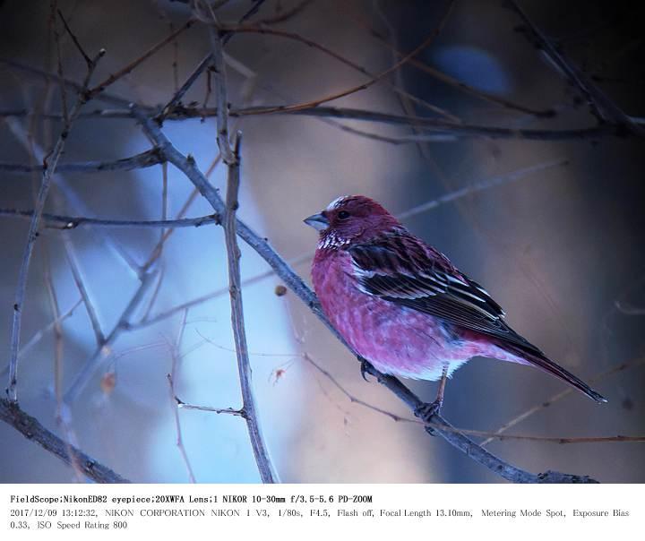 埼玉県県民の森 2017.12.9_c0062451_21484631.jpg