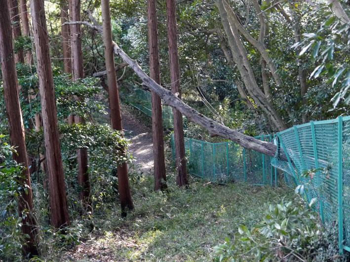 鎌倉市が円覚寺に樹木のオーバーハングで申し入れ12・19_c0014967_10155396.jpg