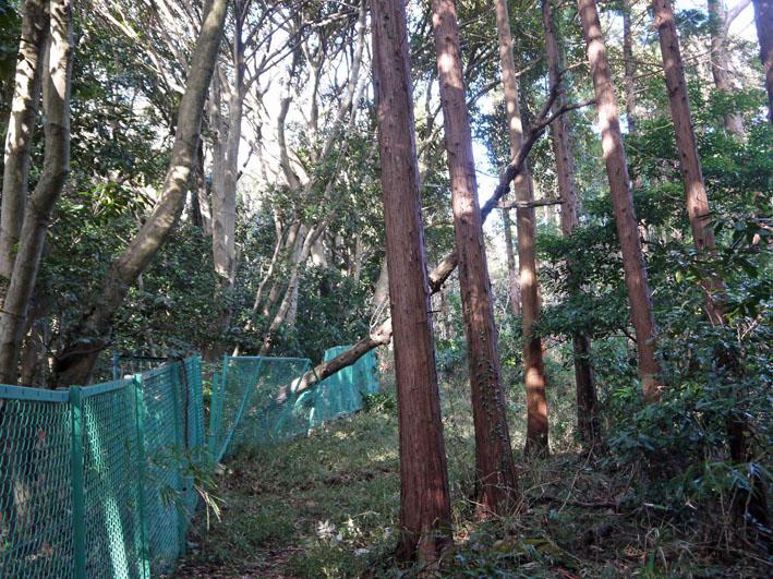 鎌倉市が円覚寺に樹木のオーバーハングで申し入れ12・19_c0014967_1016789.jpg