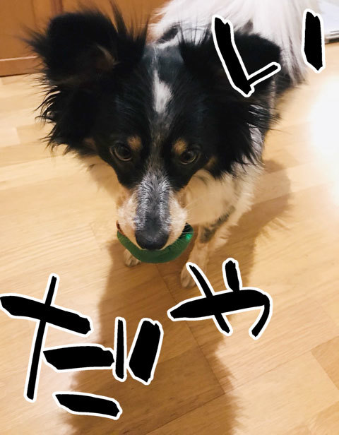 桐さんのボール_a0342172_10473885.jpg