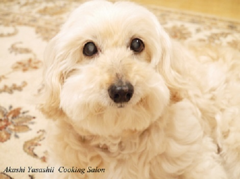 愛犬の瞳_f0361692_11272970.jpg