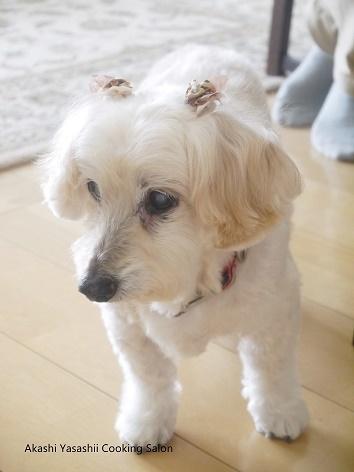 愛犬の瞳_f0361692_11285142.jpg