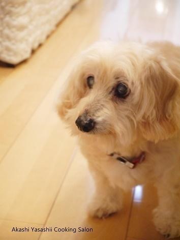 愛犬の瞳_f0361692_11295862.jpg