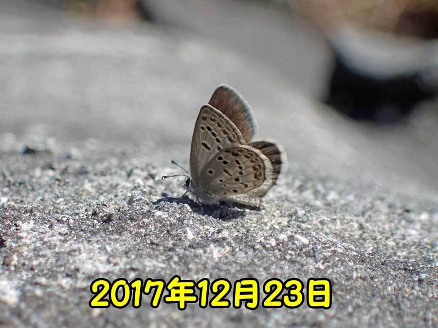 e0253104_17275935.jpg