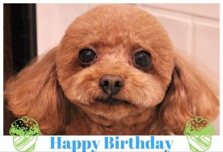 Happy Birthday ♡ ココくん_d0060413_18215646.jpg