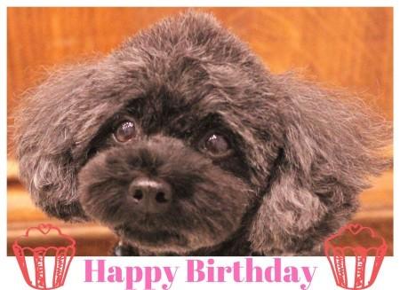 Happy Birthday ♡ ジュリーちゃん_d0060413_18331315.jpg