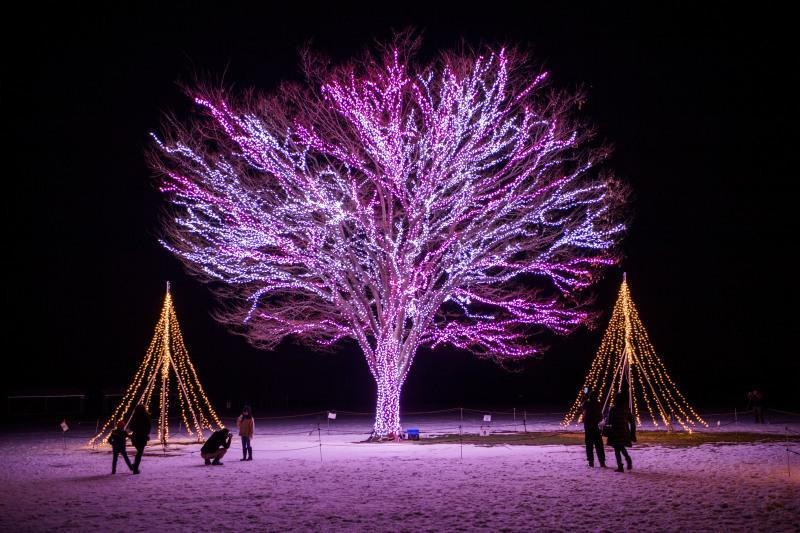 冬の風物詩_d0370716_09001727.jpg