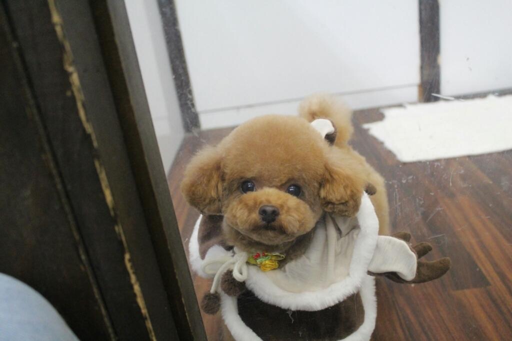 12月23日にご来店のワンちゃんです!!_b0130018_21064895.jpg