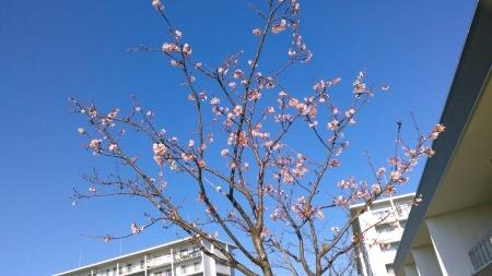 ツリーは桜の花?_b0137932_13405810.jpg
