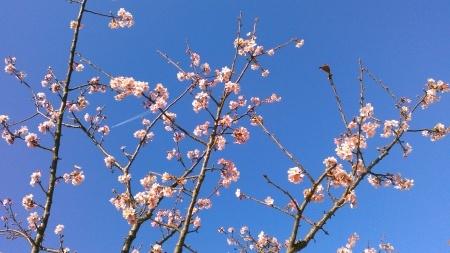 ツリーは桜の花?_b0137932_13412883.jpg