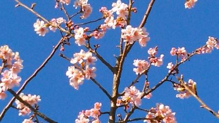 ツリーは桜の花?_b0137932_13415268.jpg