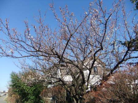 ツリーは桜の花?_b0137932_13593787.jpg