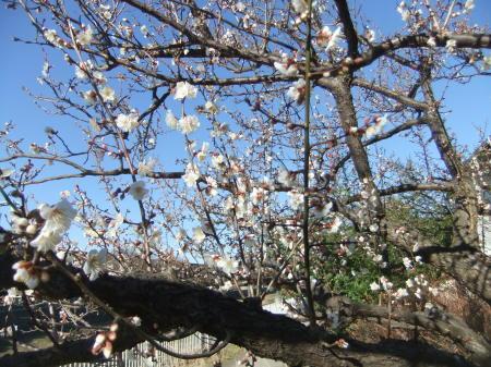 ツリーは桜の花?_b0137932_14020471.jpg