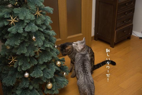 クリスマスツリーがやってきた!_d0355333_17415803.jpg