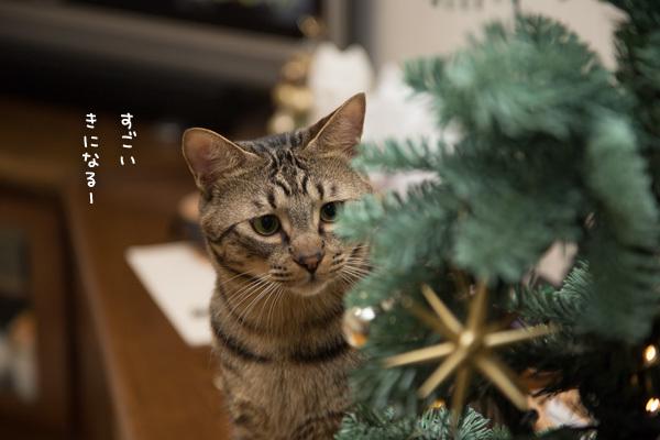クリスマスツリーがやってきた!_d0355333_17420244.jpg