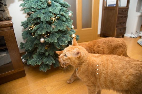 クリスマスツリーがやってきた!_d0355333_17420598.jpg