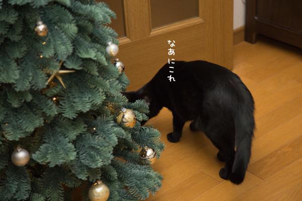 クリスマスツリーがやってきた!_d0355333_17420893.jpg
