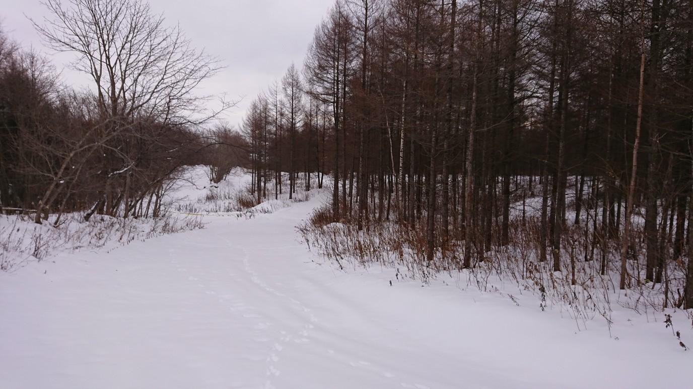 こんな感じの林間コース&桂側_e0183255_00303072.jpg
