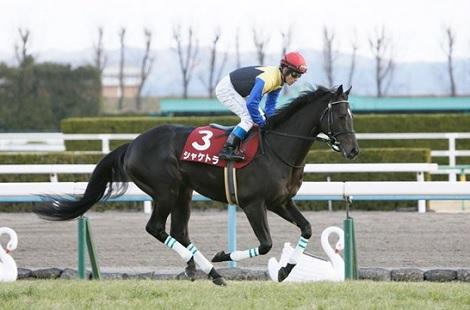 有馬記念は好きな馬、私はシャケトラ_d0183174_17462301.jpg