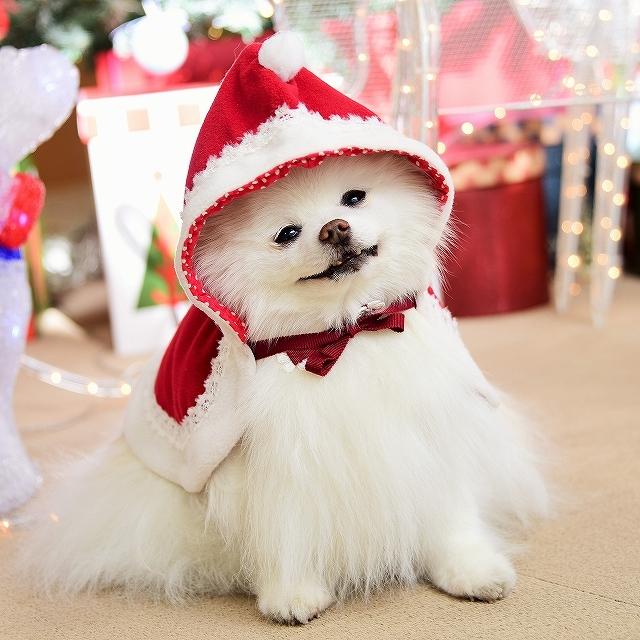 クリスマスは一緒に_d0360206_00105763.jpg