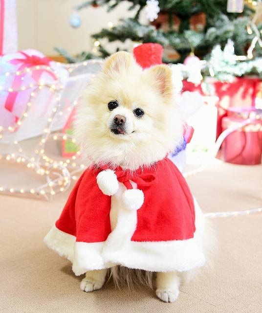 クリスマスは一緒に_d0360206_00110278.jpg