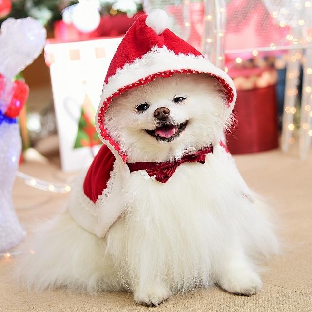 クリスマスは一緒に_d0360206_00110976.jpg